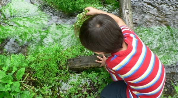 あなどれない危険生物から子供を守る5つの対策