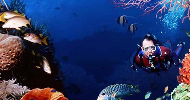 海の危険生物とは?ダイビングで注意が必要な6つの生物