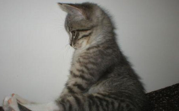 猫背を治す正しい方法☆失敗しないための5つの基礎知識